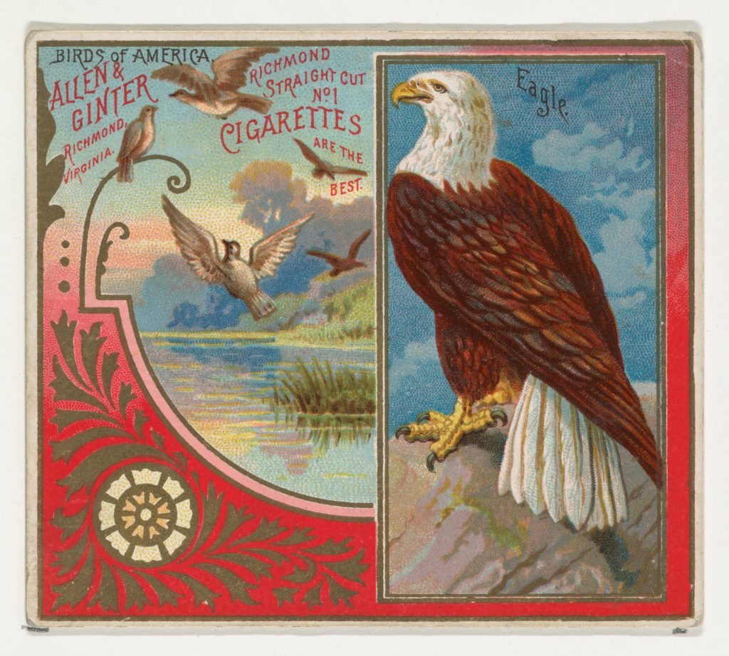 Eagle, from the Birds of America series (N37) for Allen & Ginter Cigarettes