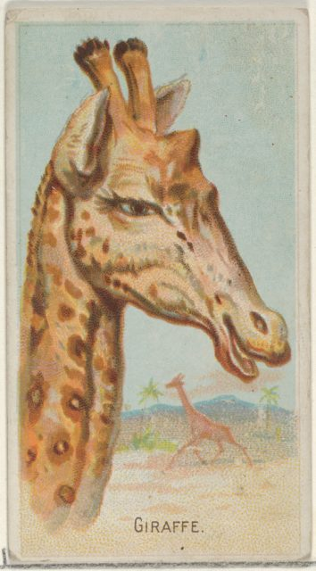 Giraffe, from the Wild Animals of the World series (N25) for Allen & Ginter Cigarettes