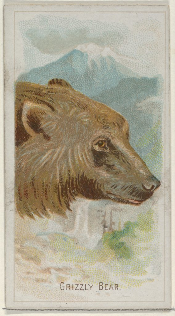 Grizzly Bear, from the Wild Animals of the World series (N25) for Allen & Ginter Cigarettes