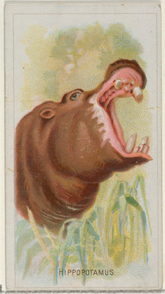 Hippopotamus, from the Wild Animals of the World series (N25) for Allen & Ginter Cigarettes