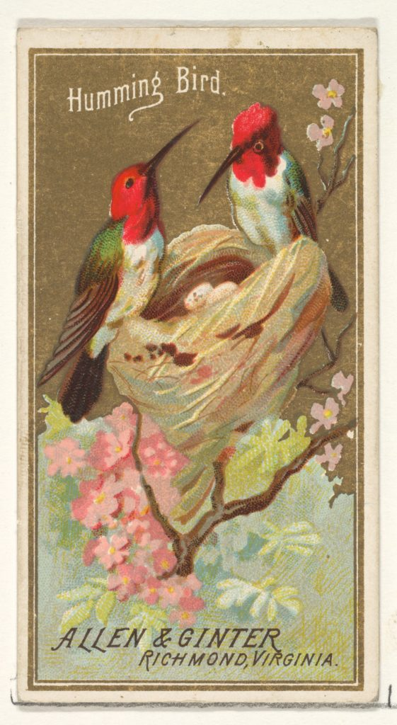 Hummingbird, from the Birds of America series (N4) for Allen & Ginter Cigarettes Brands