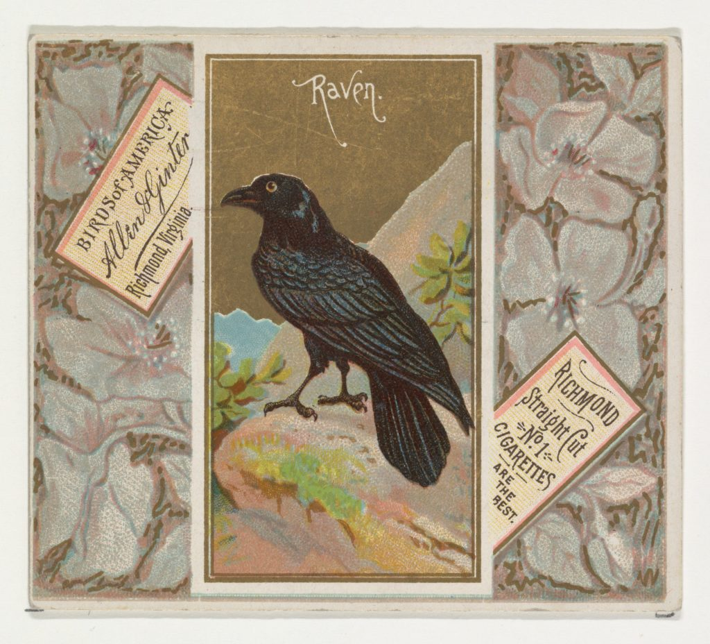 Raven, from the Birds of America series (N37) for Allen & Ginter Cigarettes