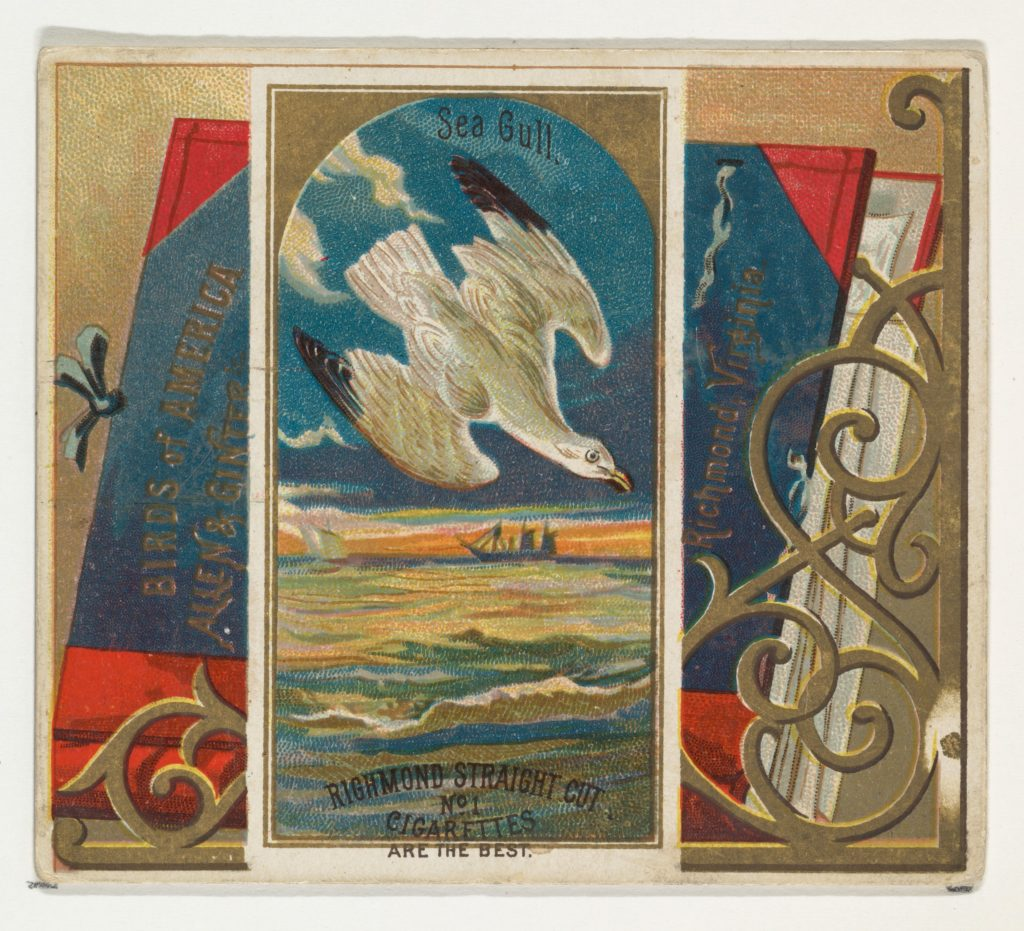 Seagull, from the Birds of America series (N37) for Allen & Ginter Cigarettes