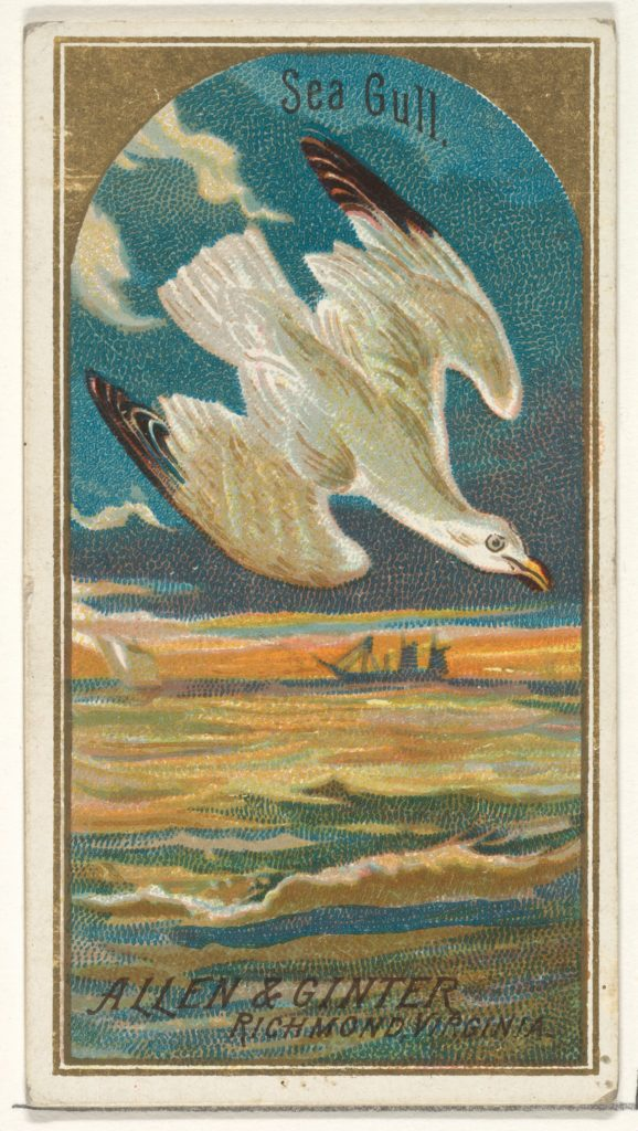 Seagull, from the Birds of America series (N4) for Allen & Ginter Cigarettes Brands