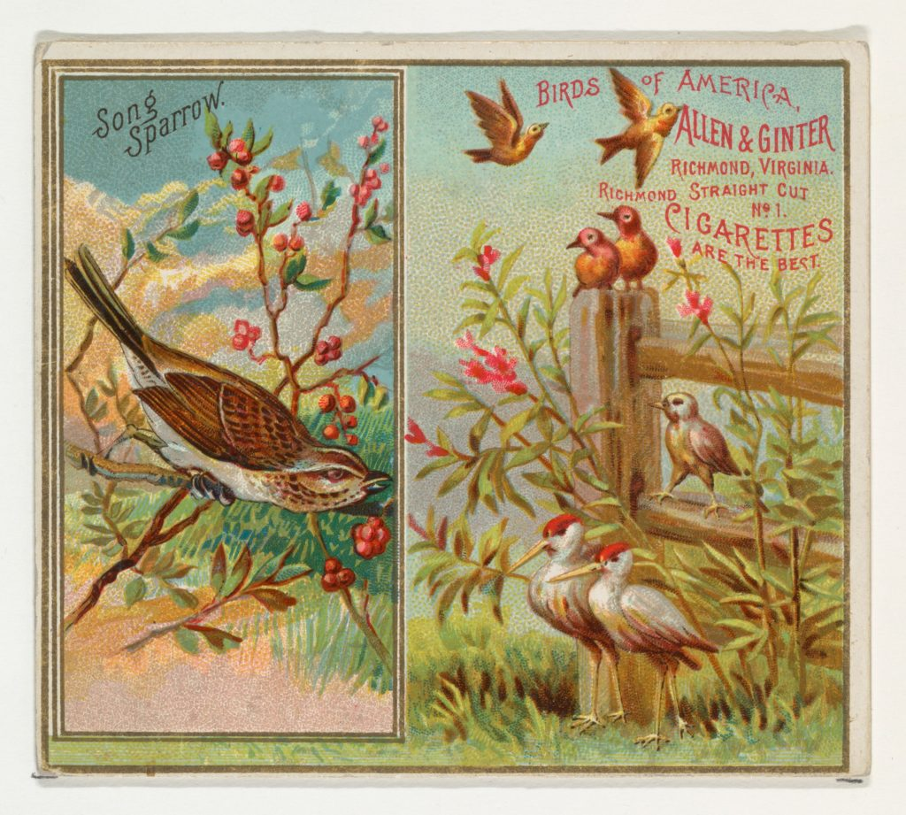 Song Sparrow, from the Birds of America series (N37) for Allen & Ginter Cigarettes