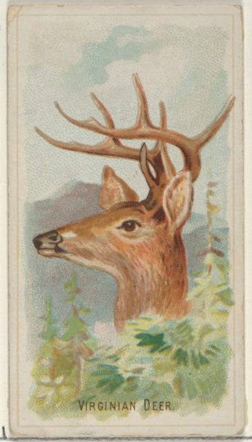 Virginian Deer, from the Wild Animals of the World series (N25) for Allen & Ginter Cigarettes