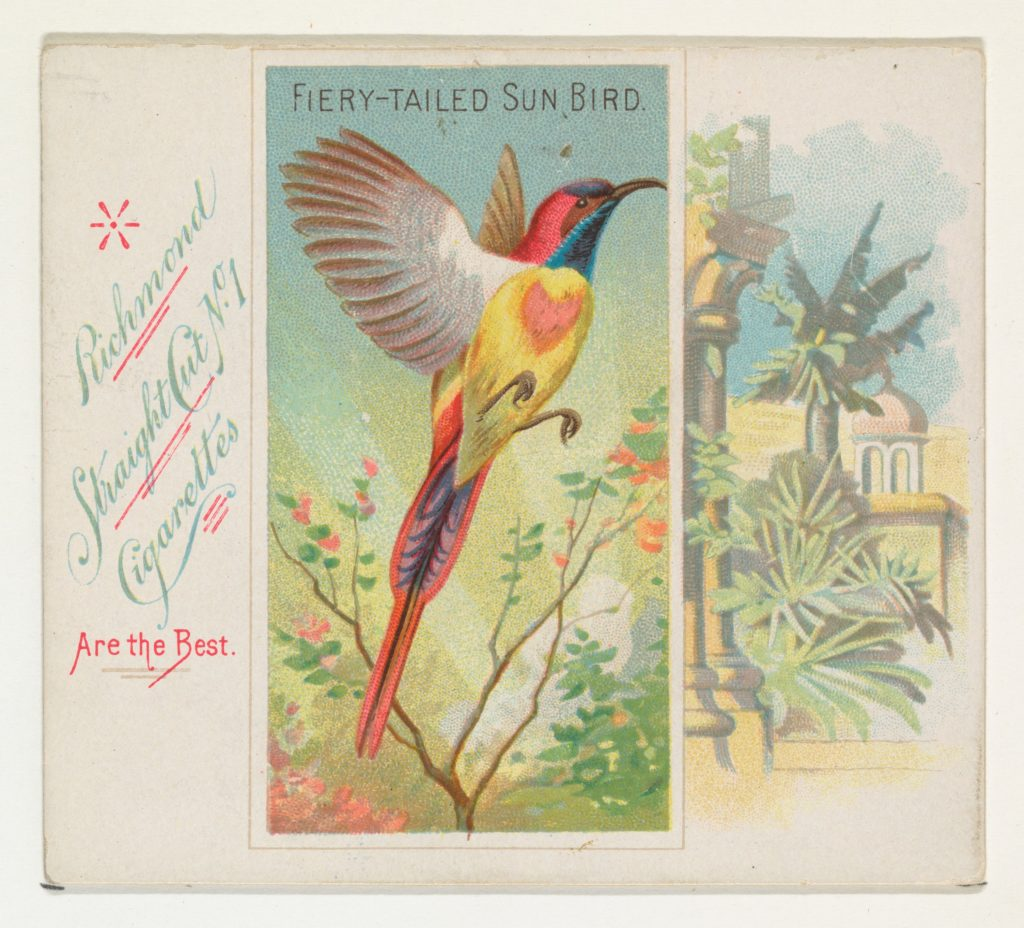Fiery-Tailed Sun Bird, from Birds of the Tropics series (N38) for Allen & Ginter Cigarettes