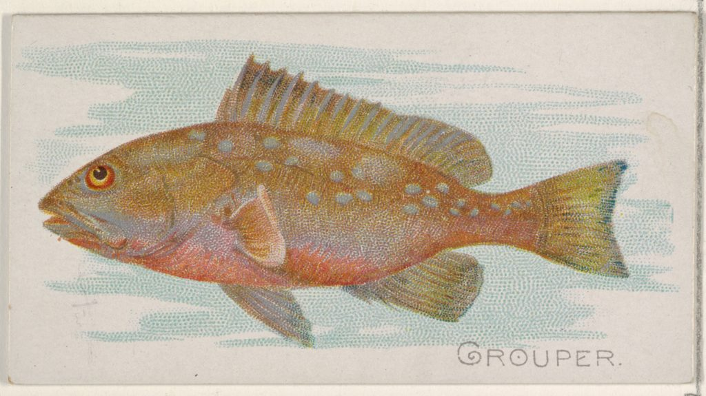 Grouper, from the Fish from American Waters series (N8) for Allen & Ginter Cigarettes Brands