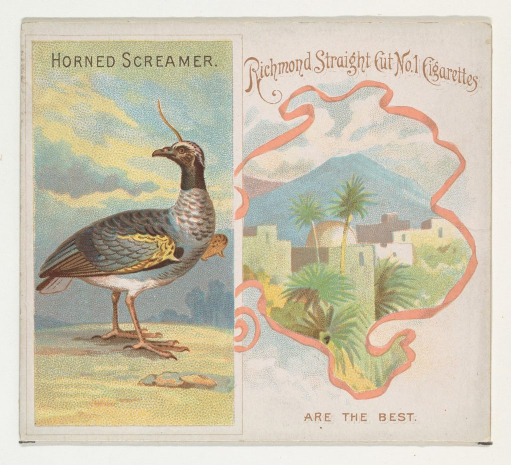 Horned Screamer, from Birds of the Tropics series (N38) for Allen & Ginter Cigarettes