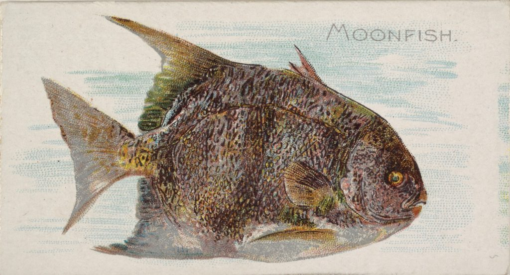 Moonfish, from the Fish from American Waters series (N8) for Allen & Ginter Cigarettes Brands