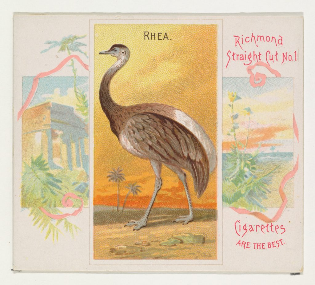 Rhea, from Birds of the Tropics series (N38) for Allen & Ginter Cigarettes