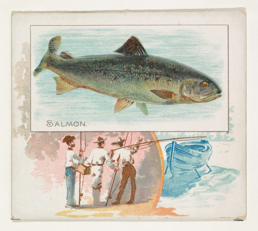 Salmon, from Fish from American Waters series (N39) for Allen & Ginter Cigarettes