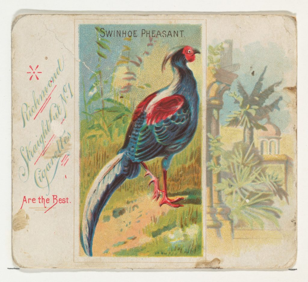 Swinhoe Pheasant, from Birds of the Tropics series (N38) for Allen & Ginter Cigarettes