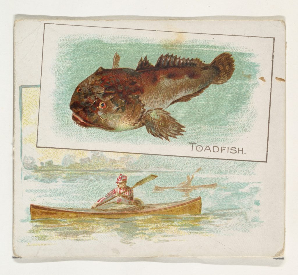 Toadfish, from Fish from American Waters series (N39) for Allen & Ginter Cigarettes