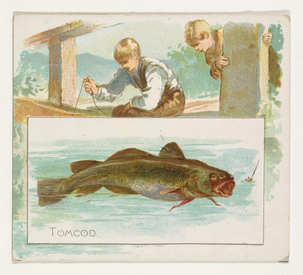 Tomcod, from Fish from American Waters series (N39) for Allen & Ginter Cigarettes