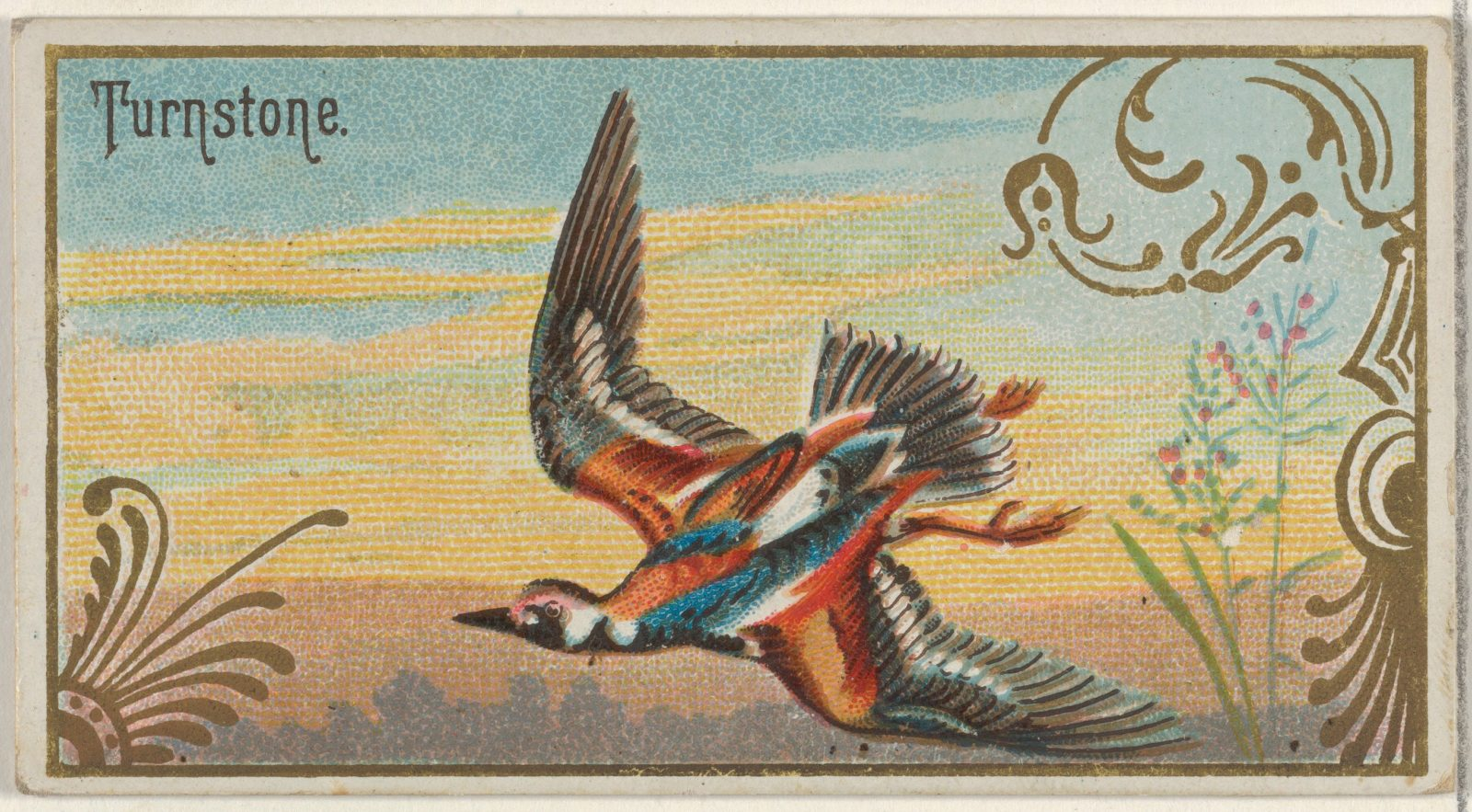 Turnstone, from the Game Birds series (N13) for Allen & Ginter Cigarettes Brands