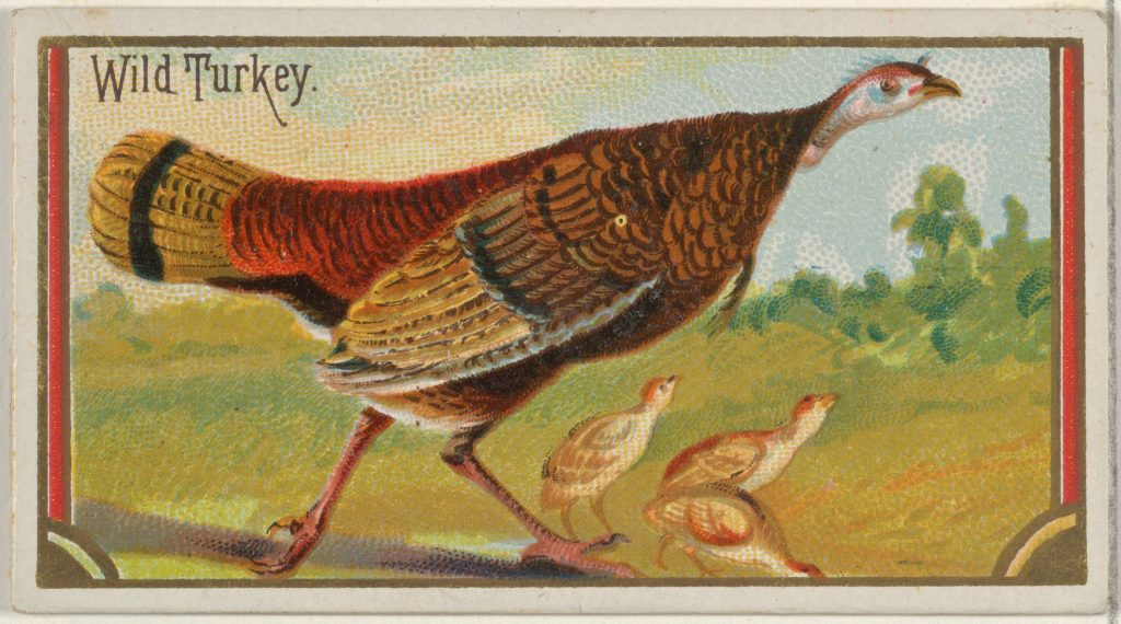 Wild Turkey, from the Game Birds series (N13) for Allen & Ginter Cigarettes Brands
