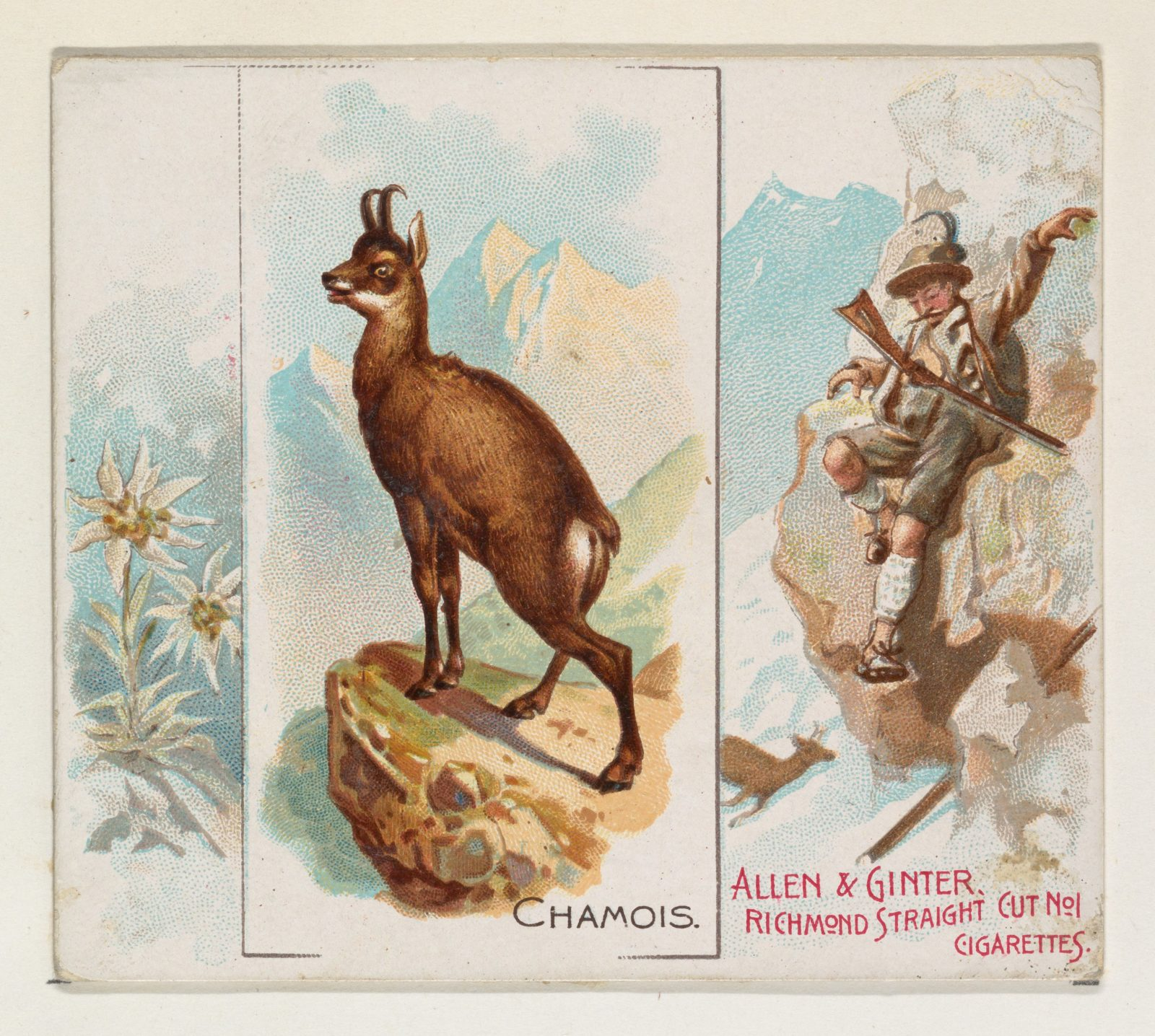 Chamois, from Quadrupeds series (N41) for Allen & Ginter Cigarettes