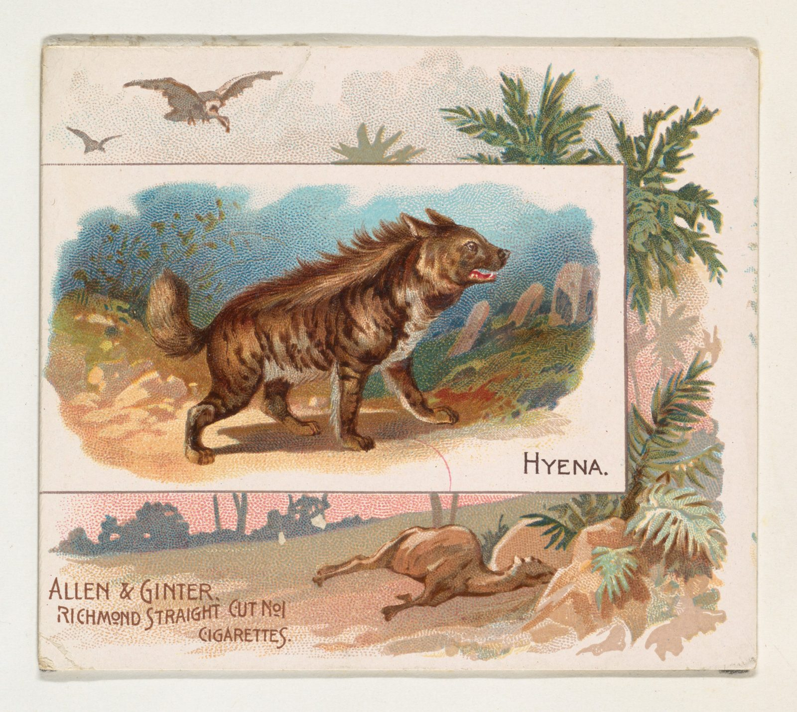 Hyena, from Quadrupeds series (N41) for Allen & Ginter Cigarettes