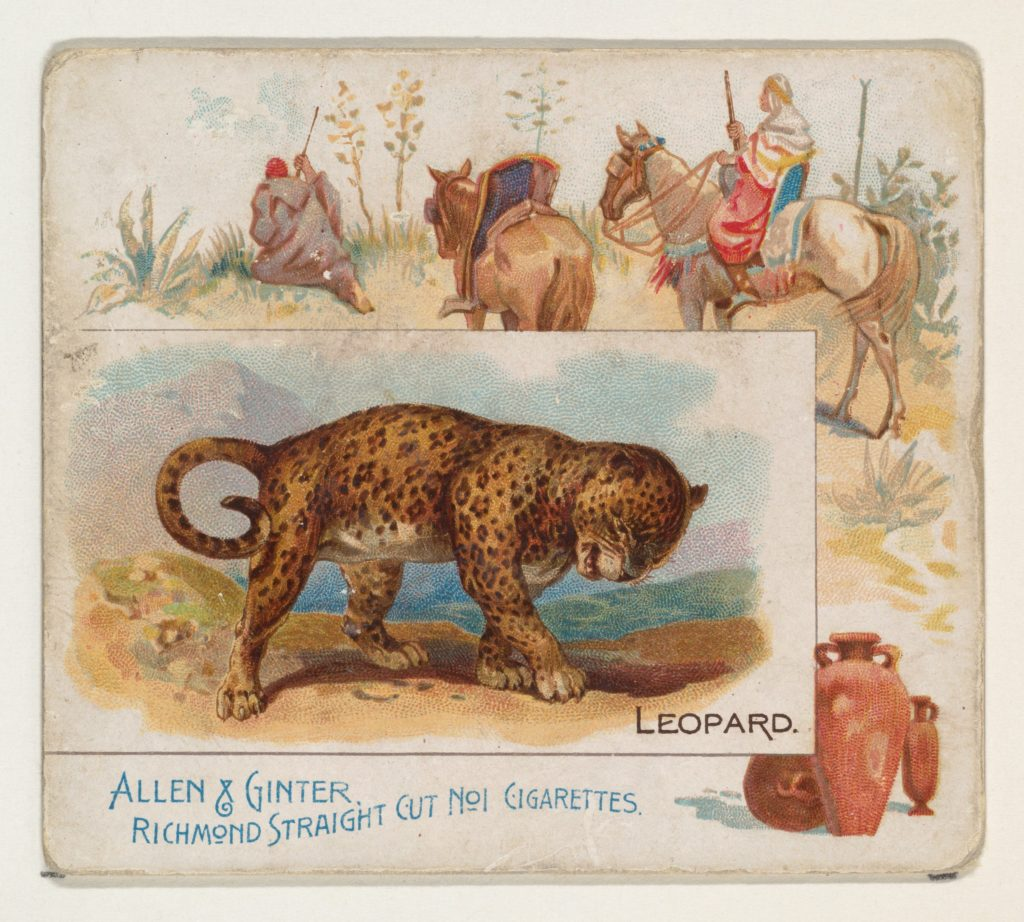 Leopard, from Quadrupeds series (N41) for Allen & Ginter Cigarettes