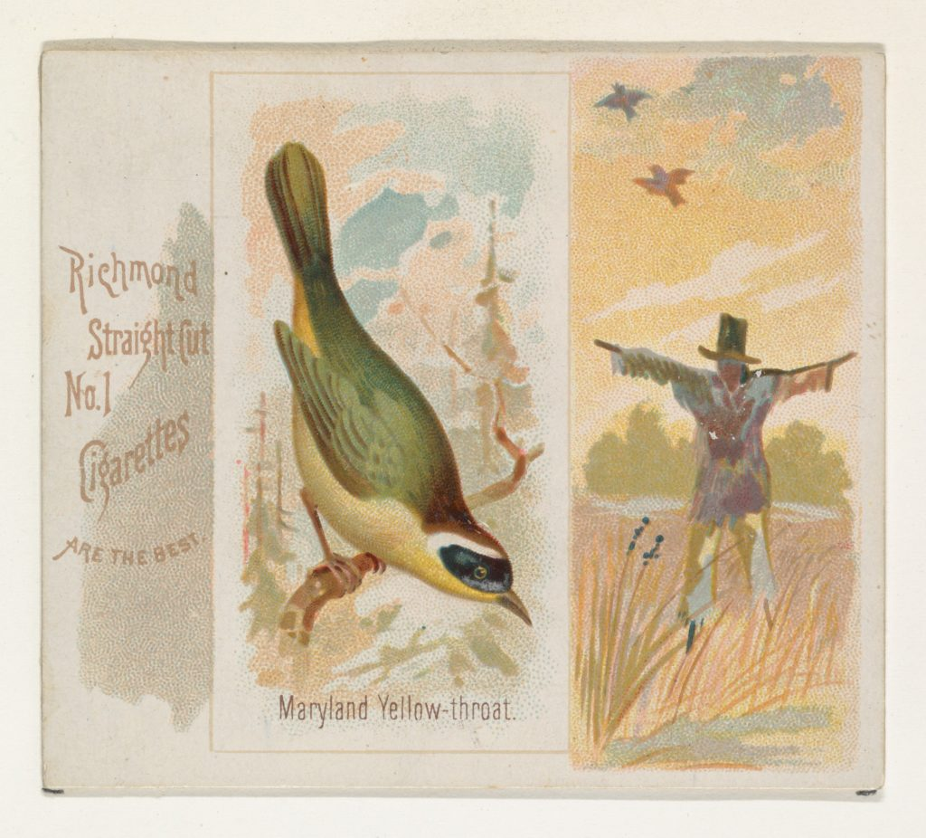 Maryland Yellow-throat, from the Song Birds of the World series (N42) for Allen & Ginter Cigarettes