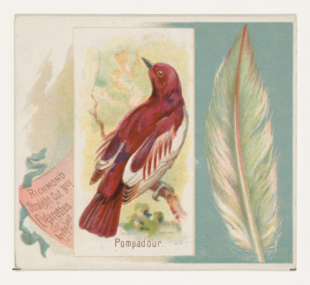 Pompadour, from the Song Birds of the World series (N42) for Allen & Ginter Cigarettes