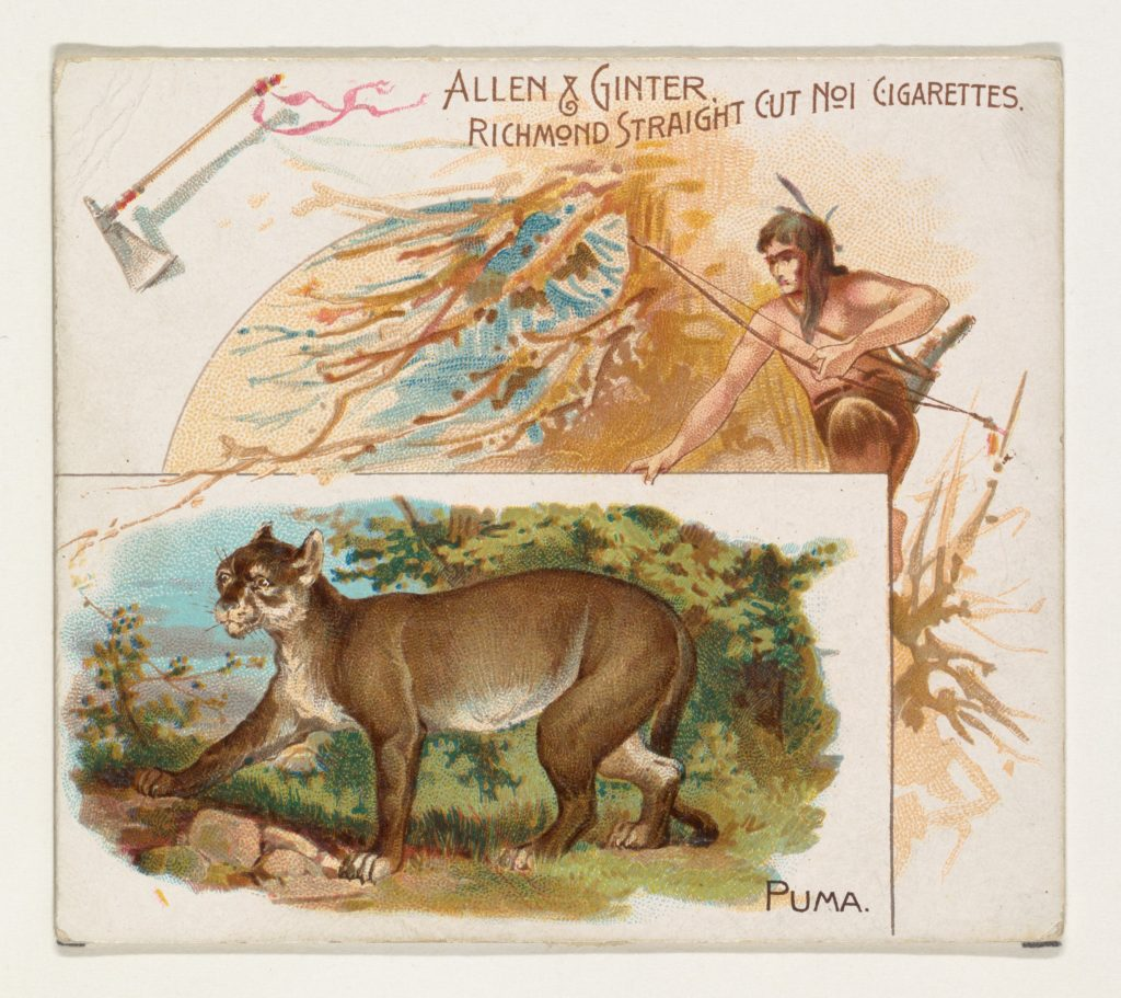 Puma, from Quadrupeds series (N41) for Allen & Ginter Cigarettes