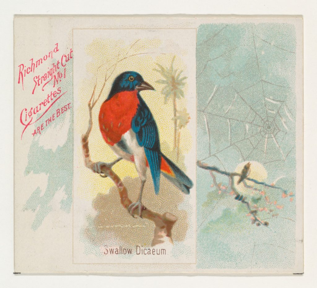 Swallow Dicaeum, from the Song Birds of the World series (N42) for Allen & Ginter Cigarettes