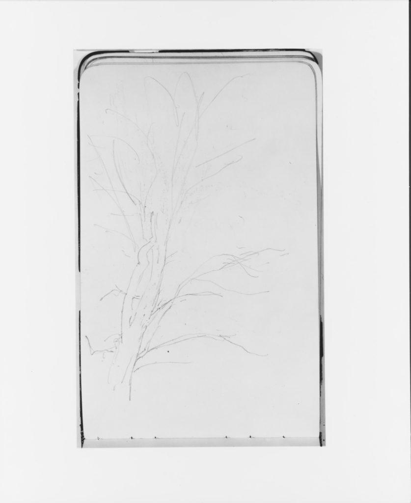 Tree (from Sketchbook)