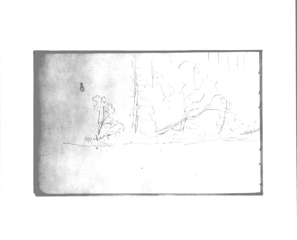 Trees (from Sketchbook)