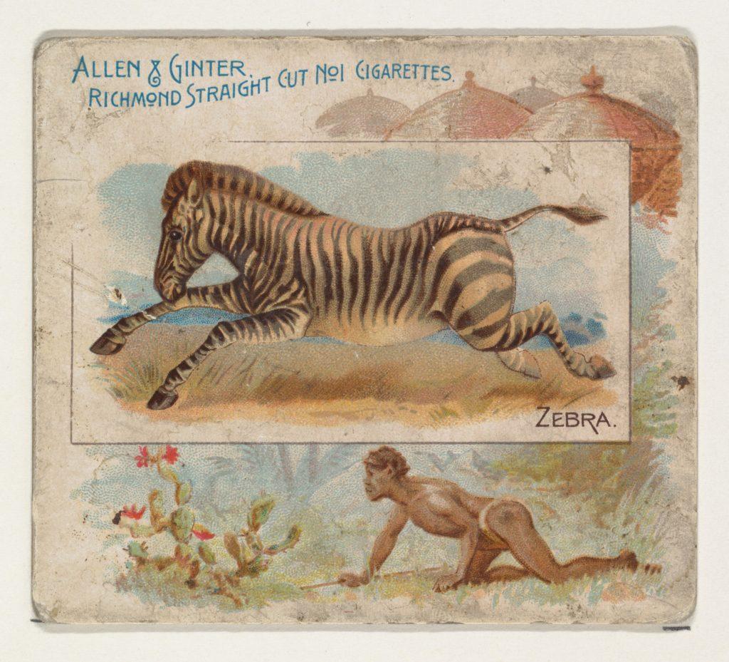 Zebra, from Quadrupeds series (N41) for Allen & Ginter Cigarettes