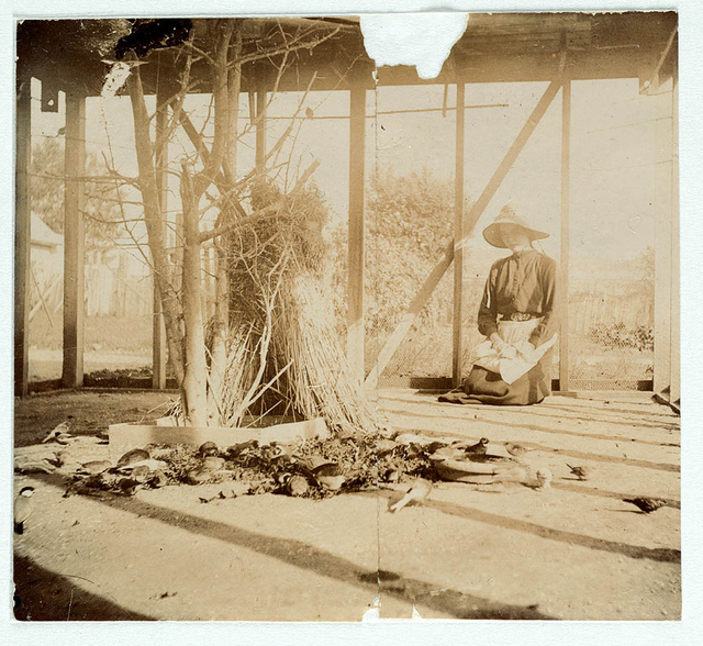 An aviary from Sydney, ca. 1885-1890 / photographed by Arthur K. Syer