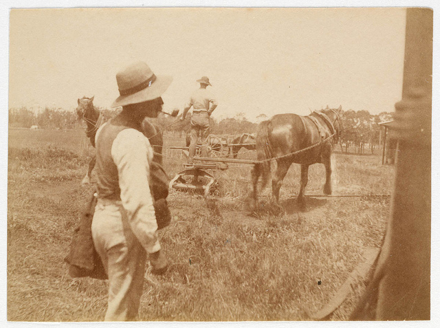 Farm scene from Sydney, ca. 1885-1890 / photographed by Arthur K. Syer