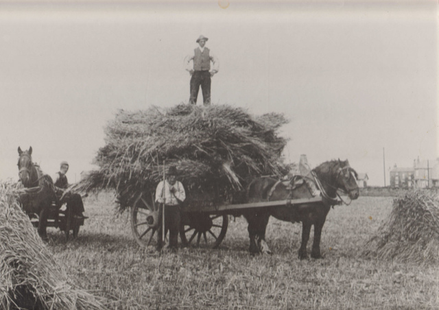 Haymaking: Horse and Cart