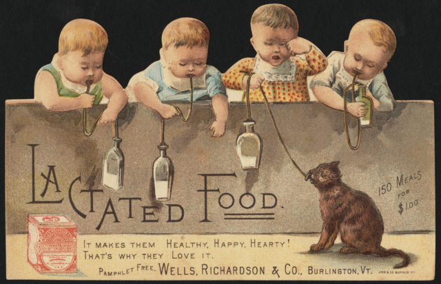 What are the babies after? Lactated Food. [back]