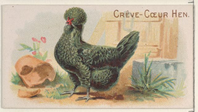 Crève-Cœur Hen, from the Prize and Game Chickens series (N20) for Allen & Ginter Cigarettes