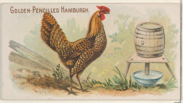 Golden-Pencilled Hamburgh, from the Prize and Game Chickens series (N20) for Allen & Ginter Cigarettes