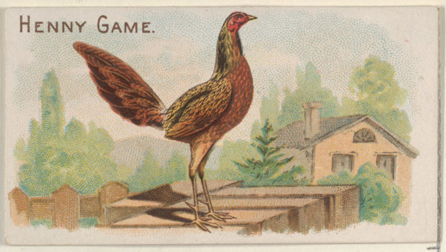 Henny Game, from the Prize and Game Chickens series (N20) for Allen & Ginter Cigarettes