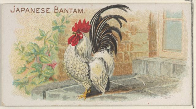 Japanese Bantam, from the Prize and Game Chickens series (N20) for Allen & Ginter Cigarettes