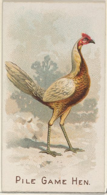 Pile Game Hen, from the Prize and Game Chickens series (N20) for Allen & Ginter Cigarettes