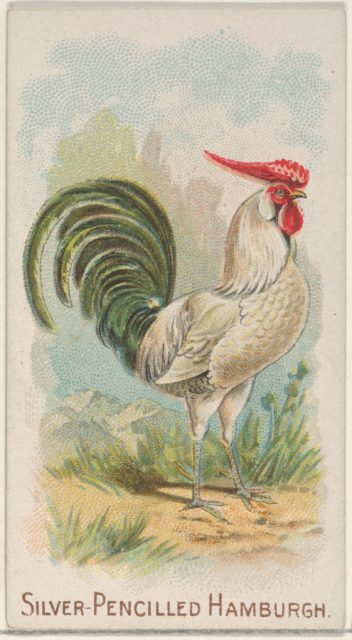 Silver-Pencilled Hamburgh, from the Prize and Game Chickens series (N20) for Allen & Ginter Cigarettes