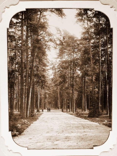 View of the territory around the Bialowieza Palace