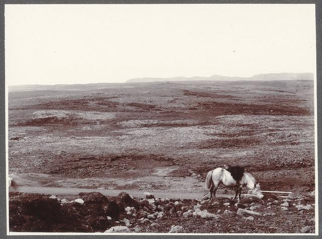 A lava sheet. Road from Reykjavík to Ölvesá.