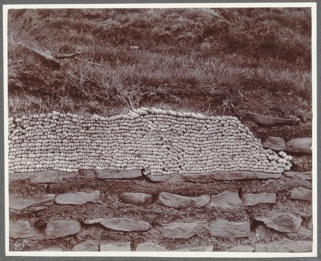A wall of sheep's bones, Vaðbrekka.