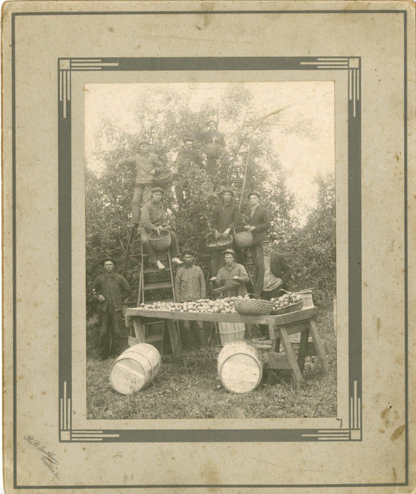 Apple Harvest, c. 1880-1900