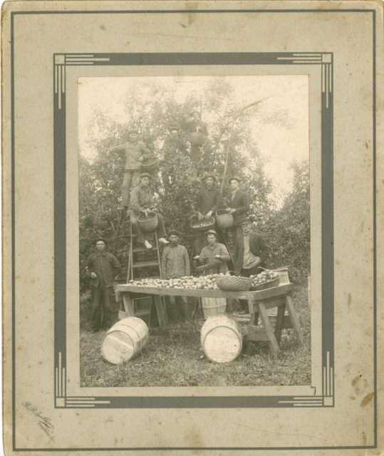 Apple Harvest, c. 1880-1900