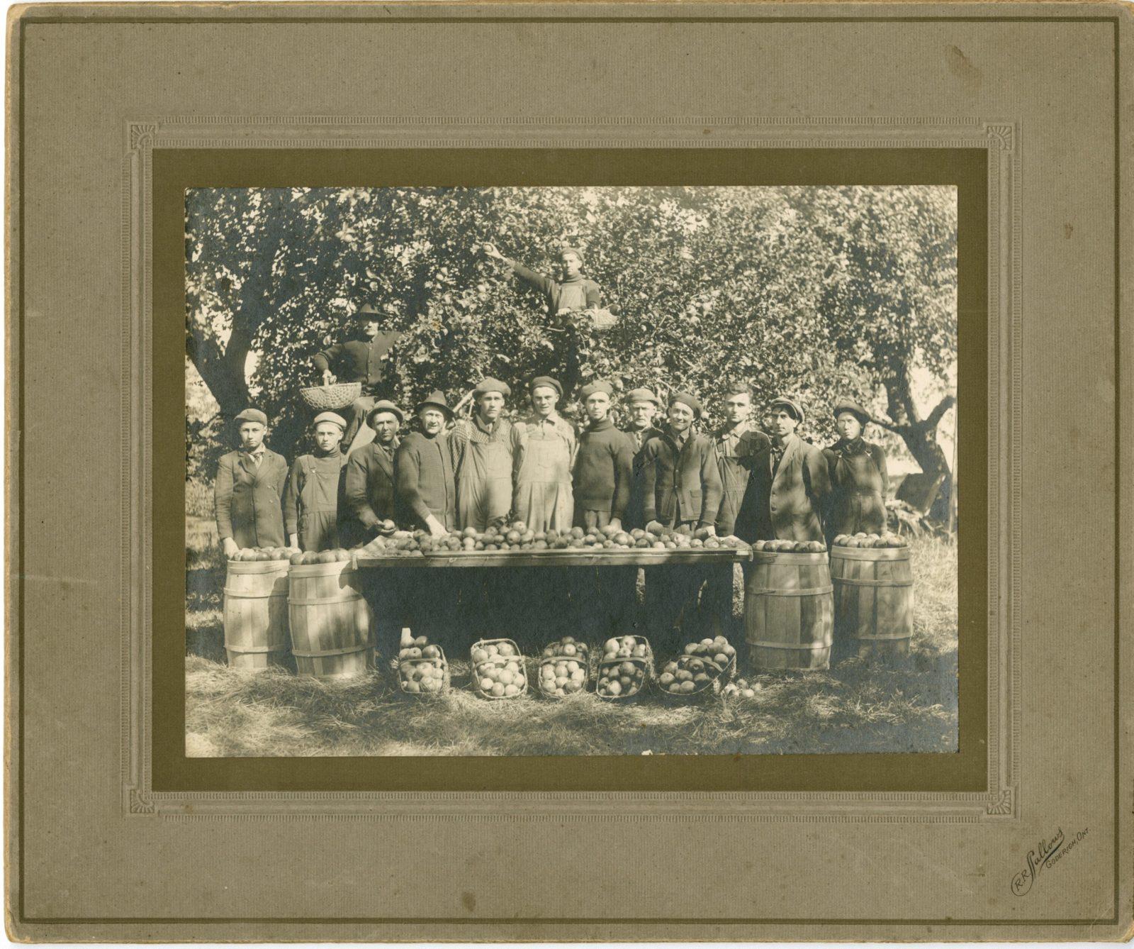Apple Harvest, c. 1890-1900