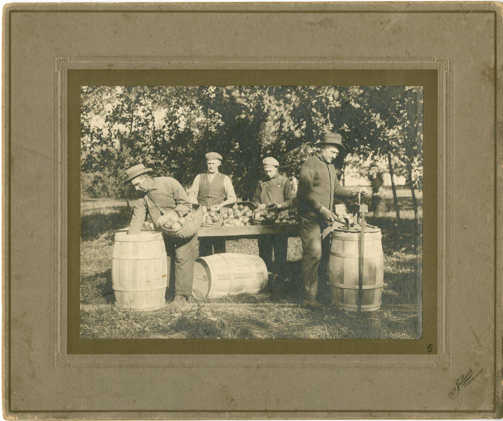 Яблочный урожай, около 1890-1900