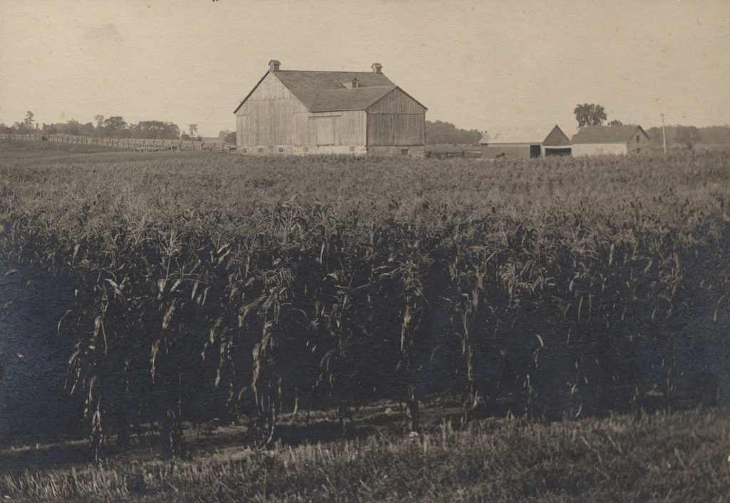 Кукурузное поле с сараем, дата неизвестна