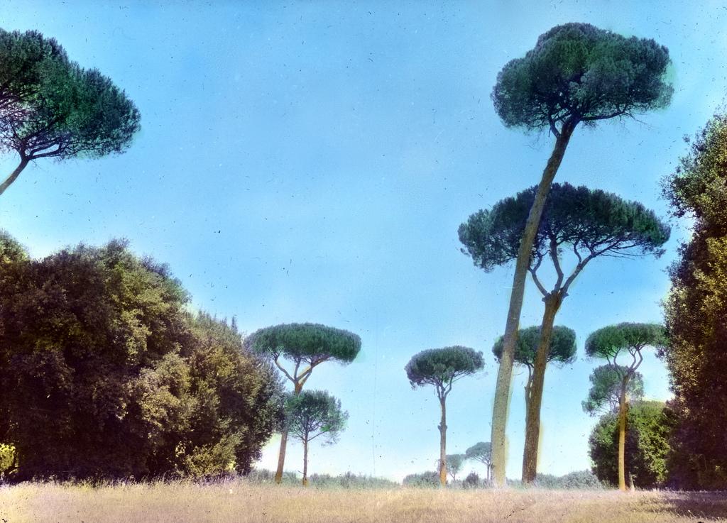 Doria Pamphili – Pinu eembra